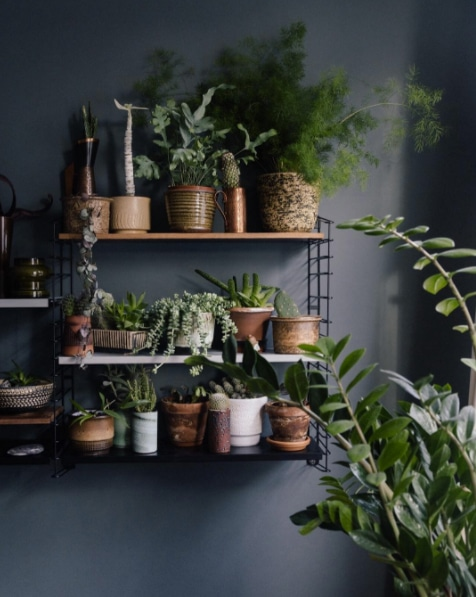 Best Garden Instagrams - Plant Photography Accounts