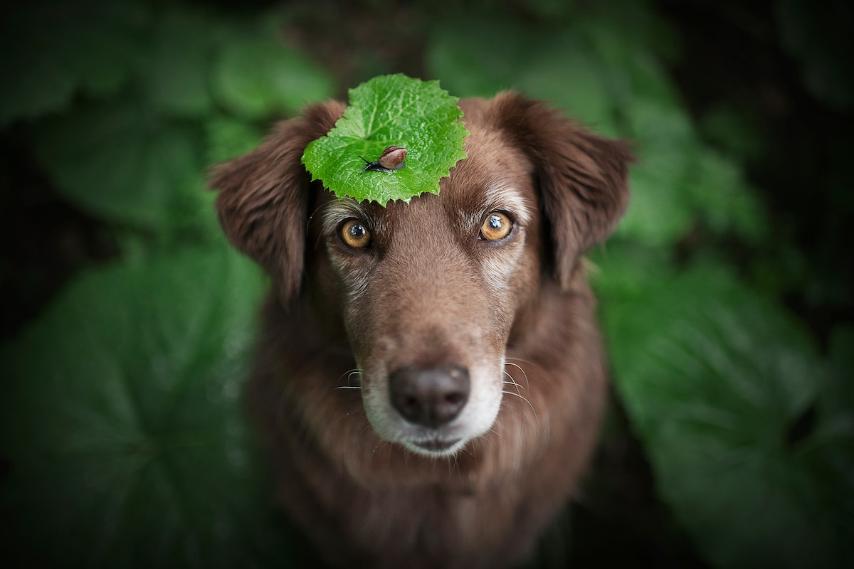 Dog Portraits Photography