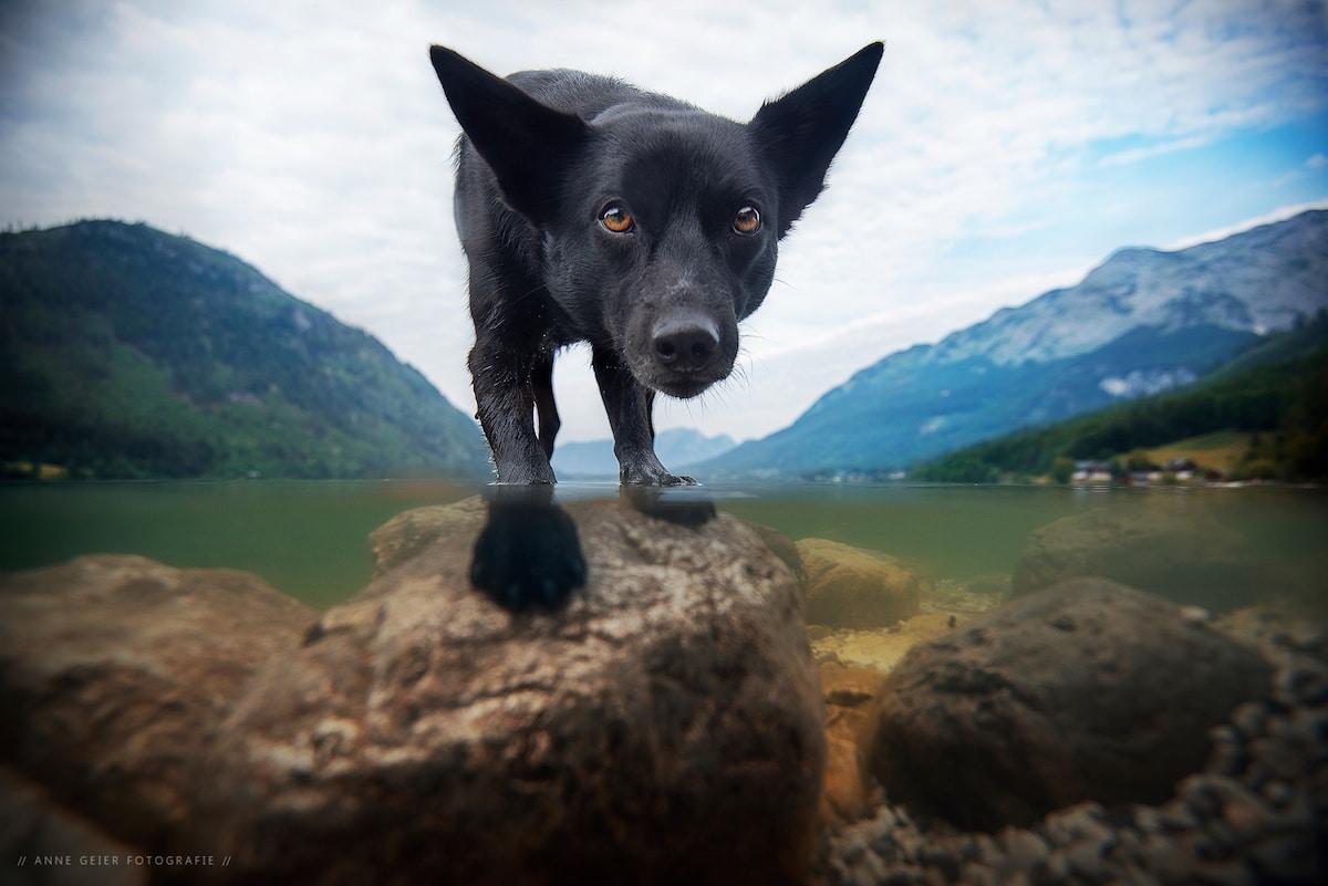 Dog Portraits Photography