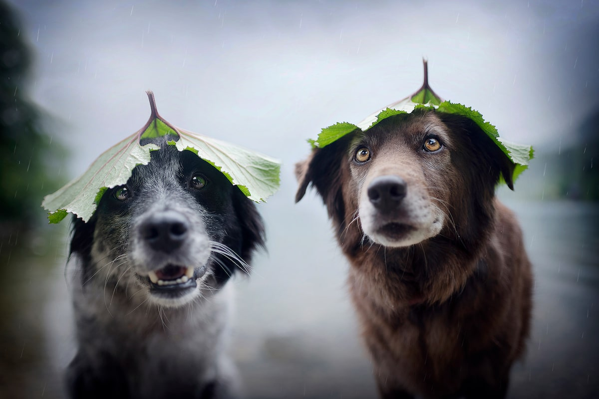 Creative Dog Photography Tips by Anne Geier