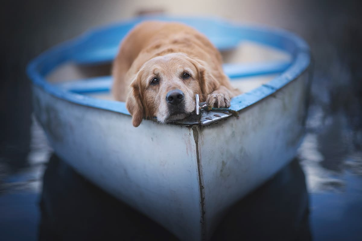 Dog Photography by Anne Geier