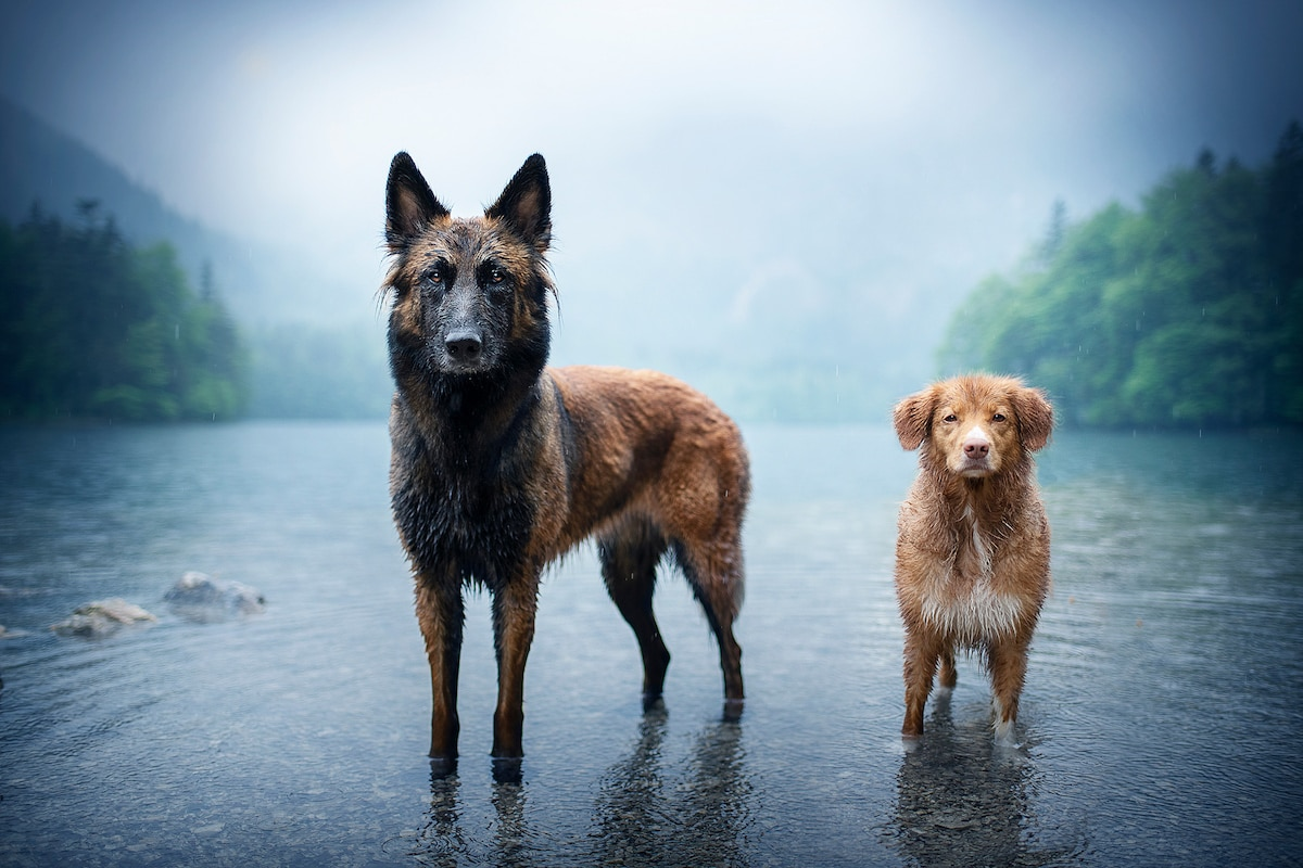 Creative Dog Photography Tips by Anne Geier
