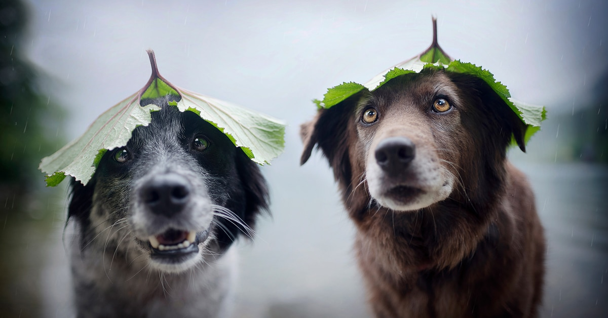Interview: Dog Photographer Offers Pro Tips for Capturing Stunning Portraits of Your Pooch