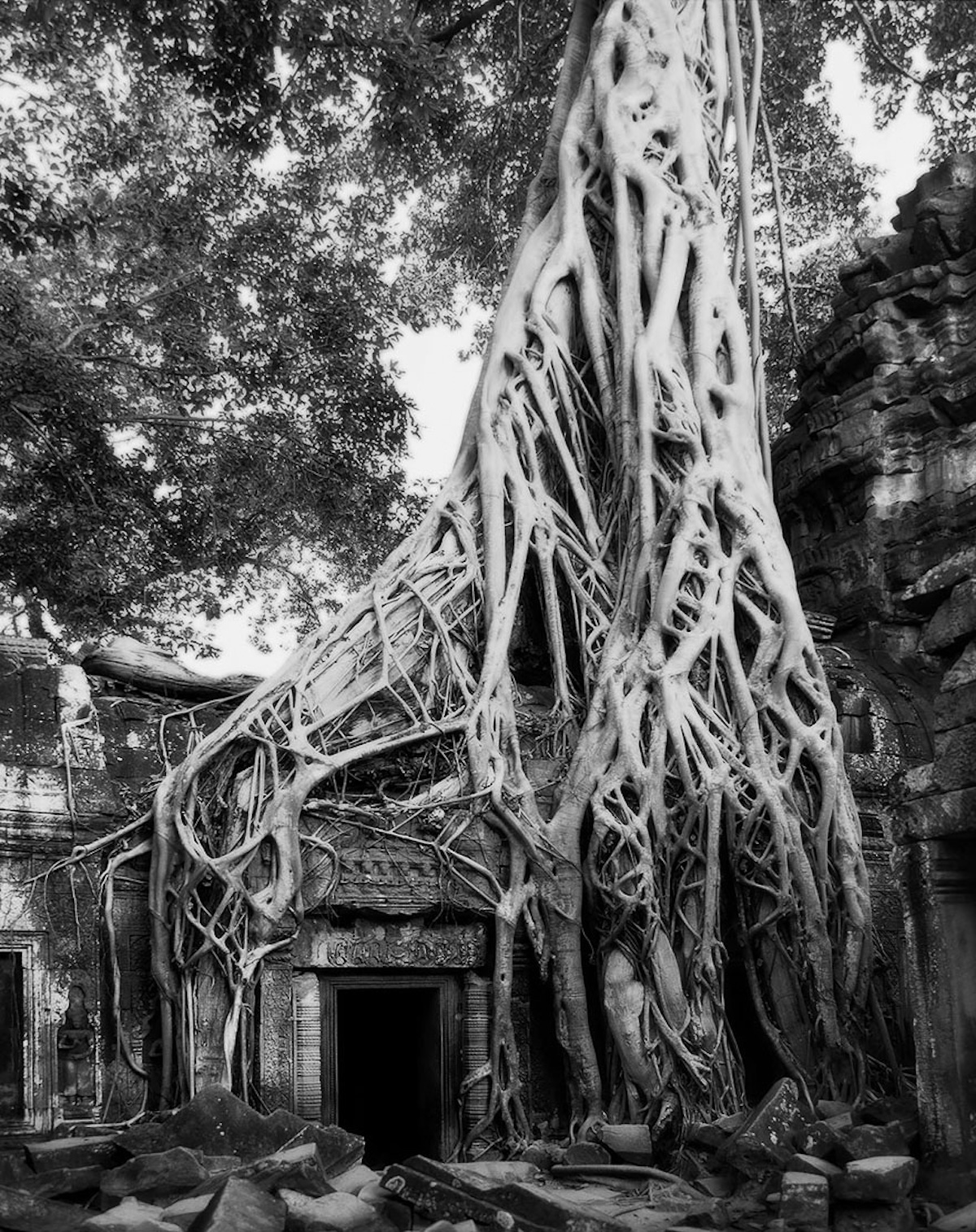 Oldest Tree Photographs by Beth Moon