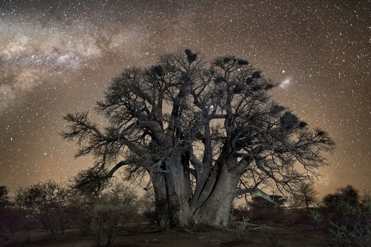 Ancient Trees Photographed by Beth Moon