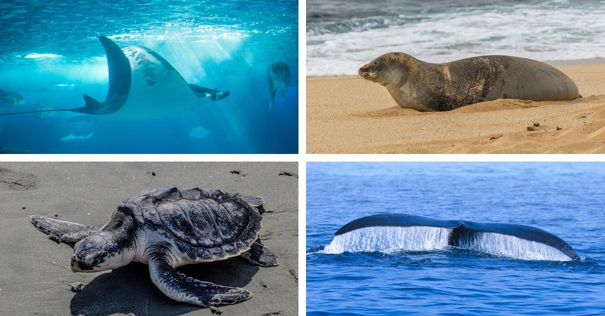 Image of: Marine Life My Modern Met Endangered Marine Species That Need Your Help