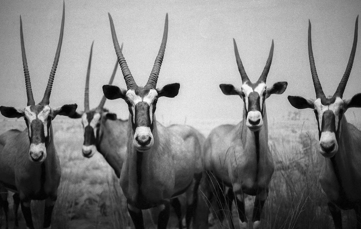 Lucus Landers - Wildlife