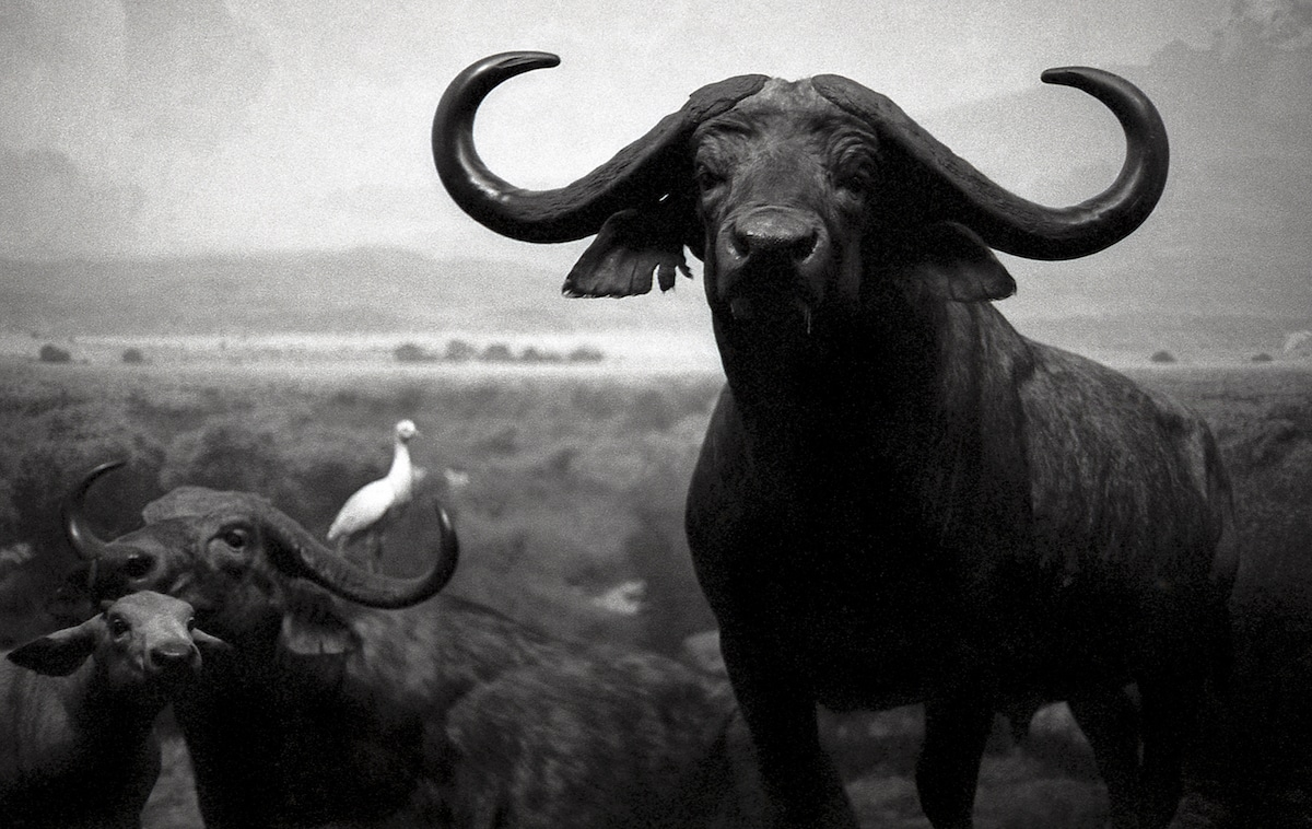 Lucus Landers Black and White Film Photography