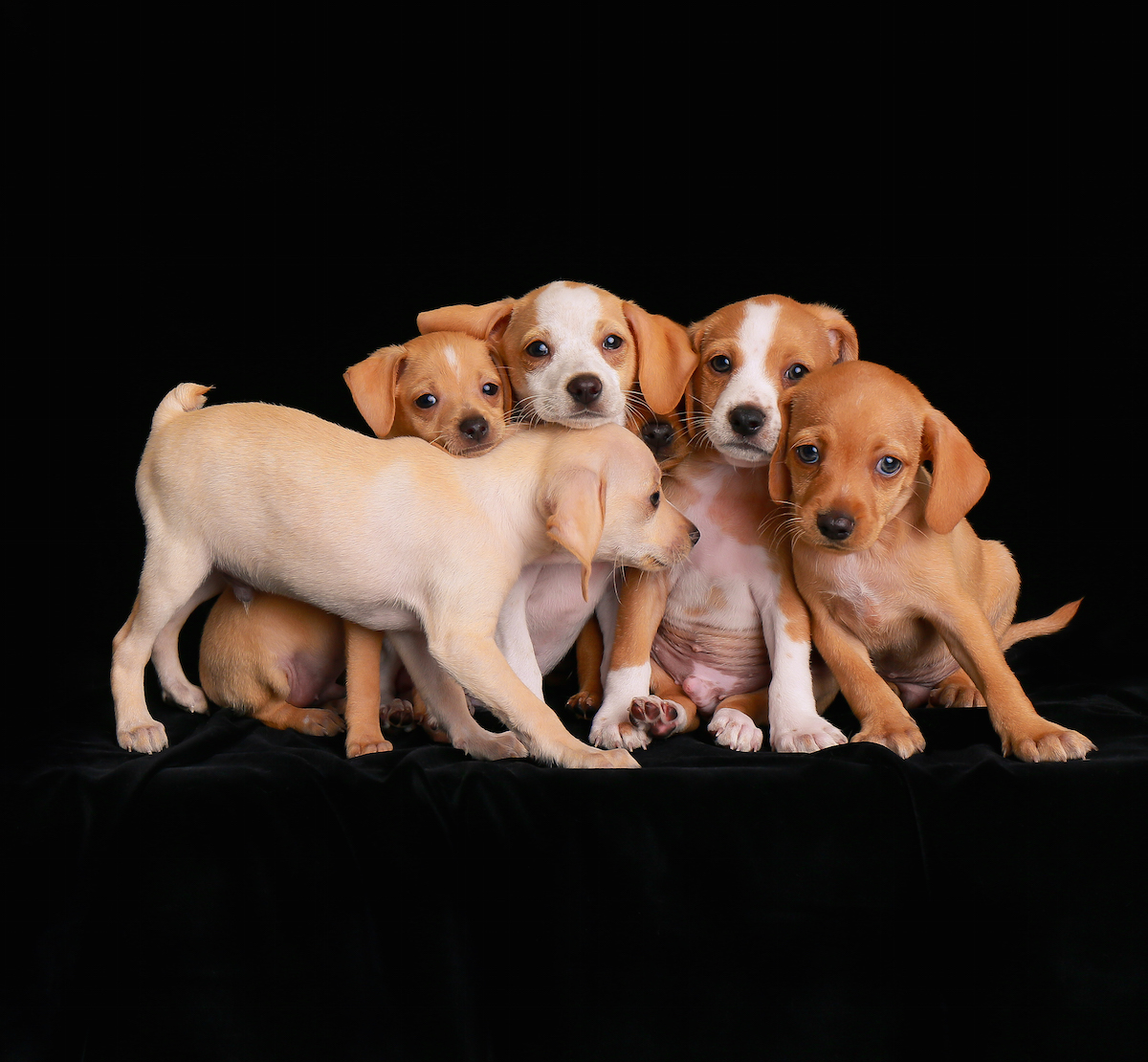 2018 Dog Photographer of the Year Dog Photos by The Kennel Club