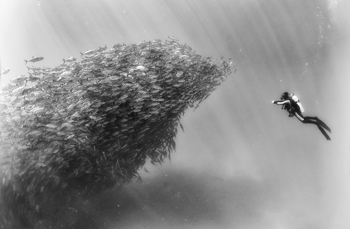 Artistic black and white underwater photography by anuar patjane floriuk