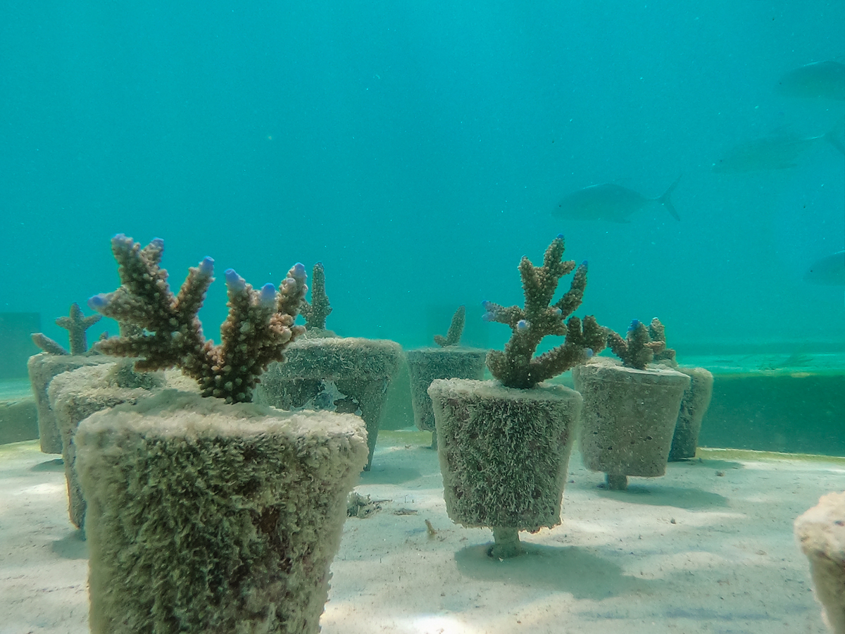 Coralarium Artificial Reef