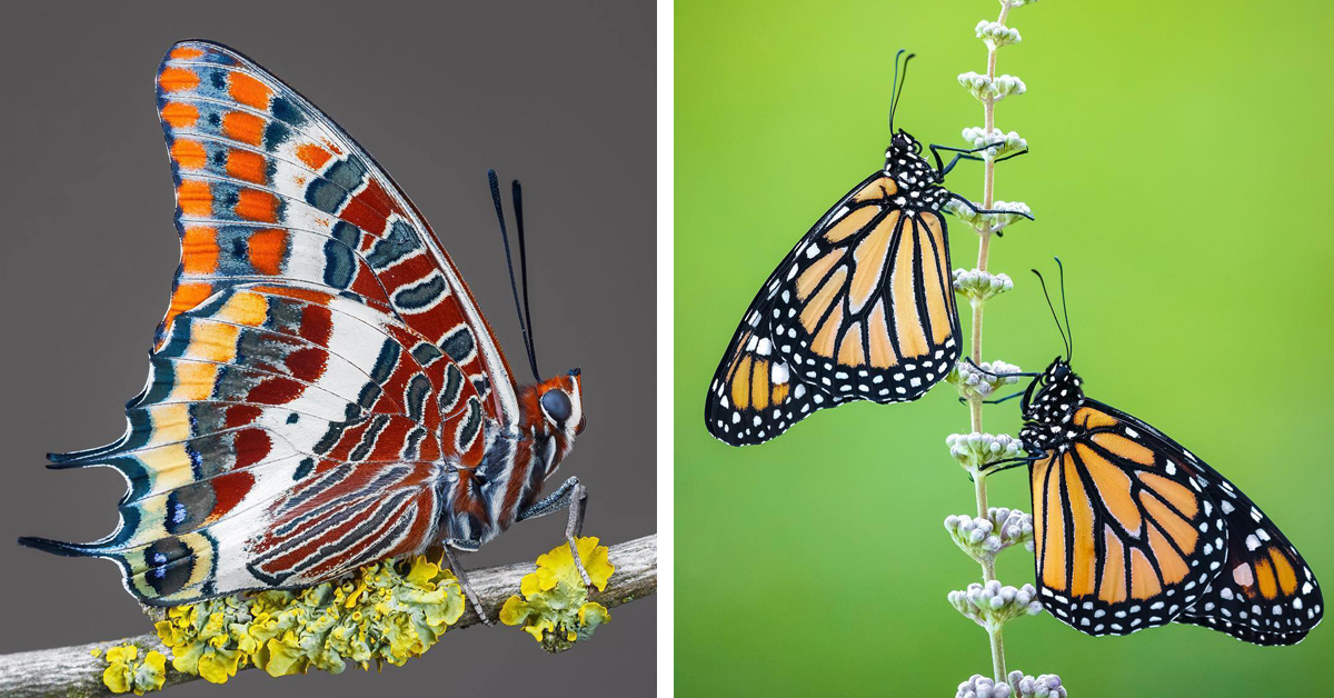 Biologist Captures the Brilliant Details of Butterflies Perched on Flowers