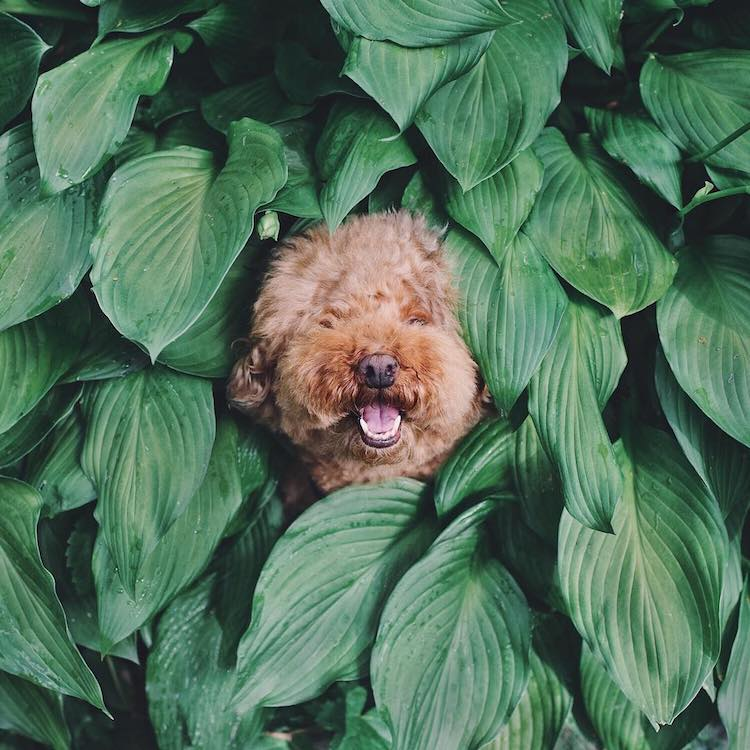 Cookie, a Cute Dog on Instagram