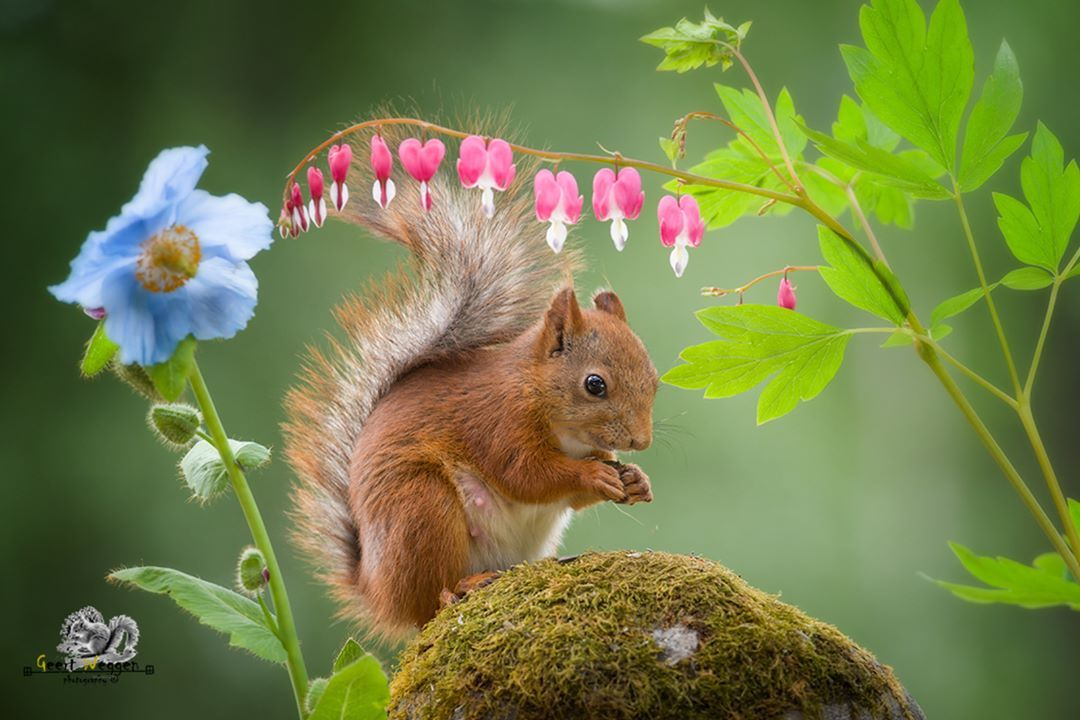 Animal Photography by Geert Weggen
