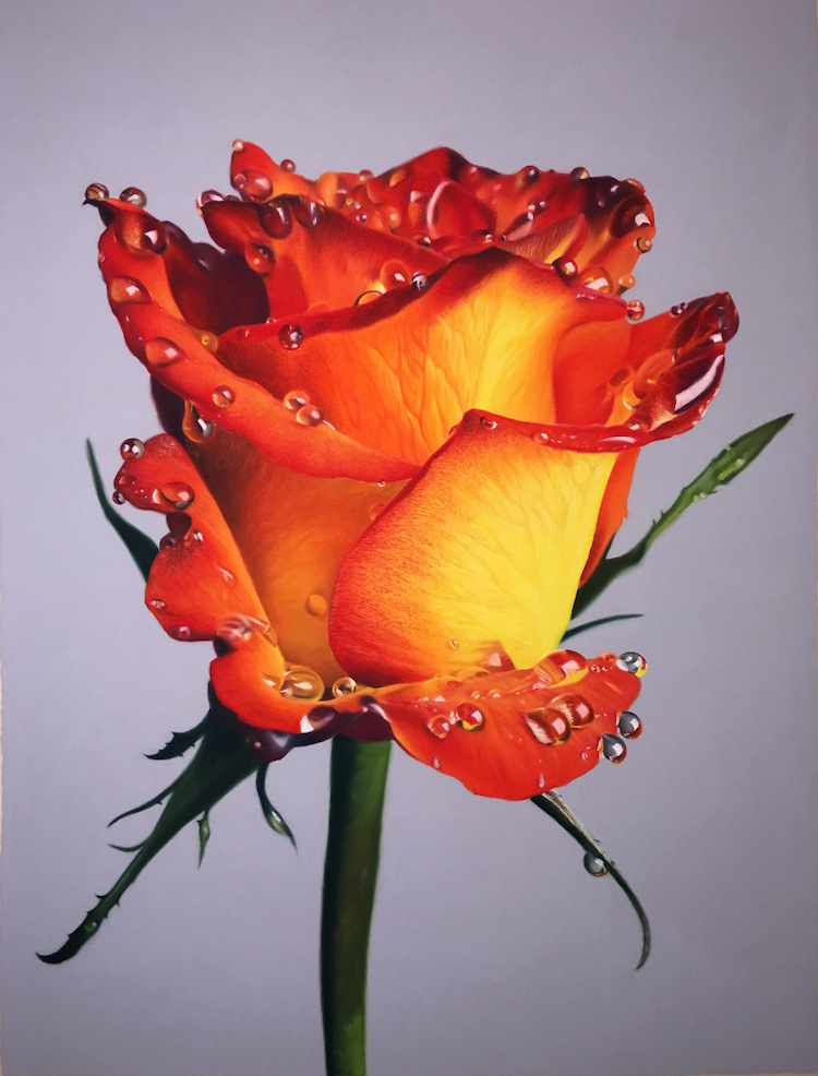 hyperreal oil pastel drawings of flowers drenched in honey