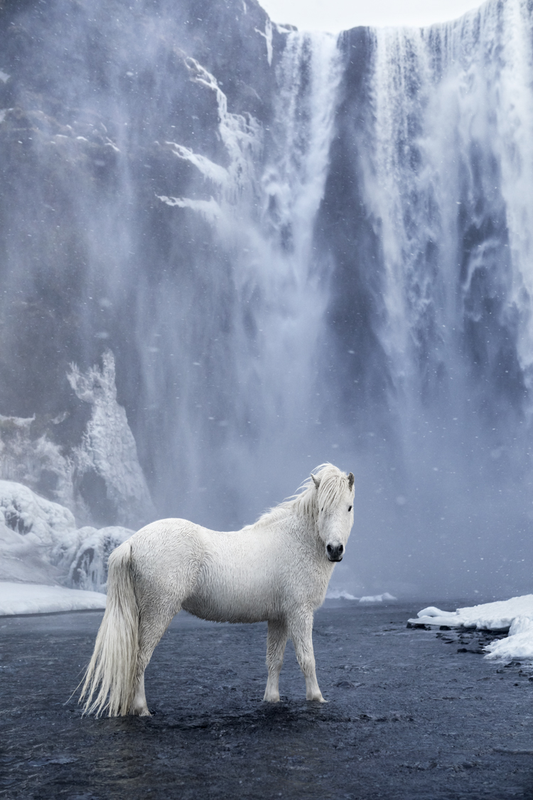 Photographer Captures The Mystical Beauty Of Icelandic Horses