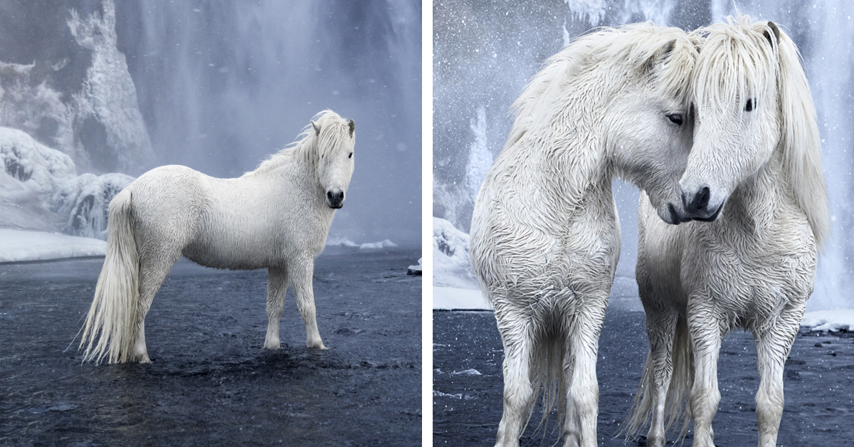 Photographer Captures Fairytale-Like Horses That Roam Iceland's Beautiful Landscape