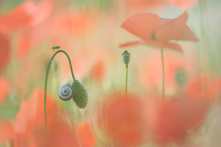 International Garden Photographer of the Year 2018 Macro Photo Winners