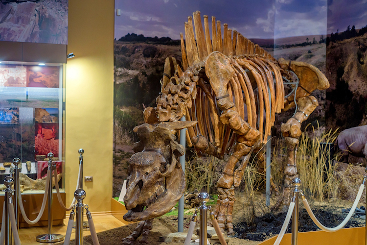 Elasmotherium skeleton
