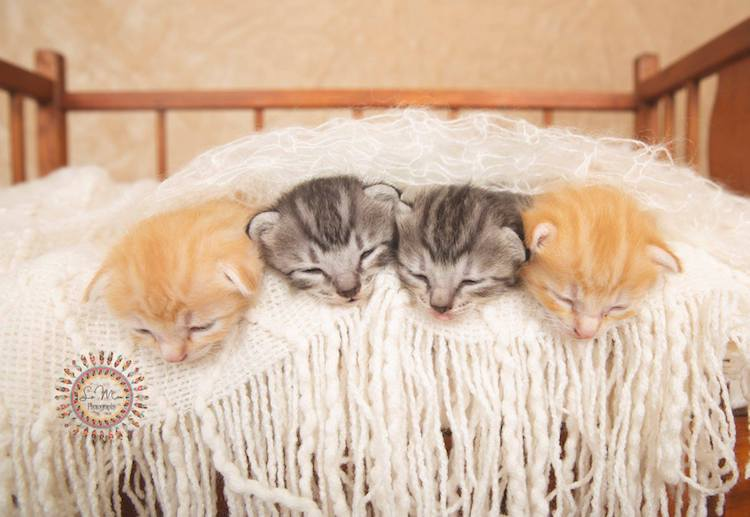 Adorable Cat Newborn Photo Shoot