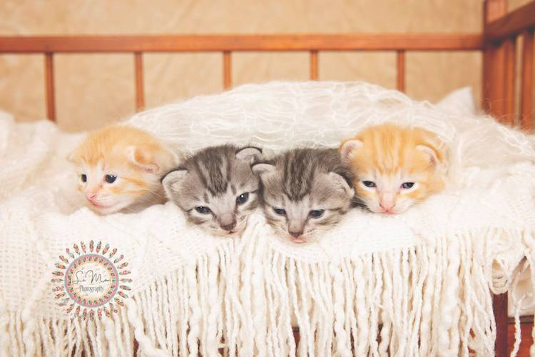 Newborn Cat Photos