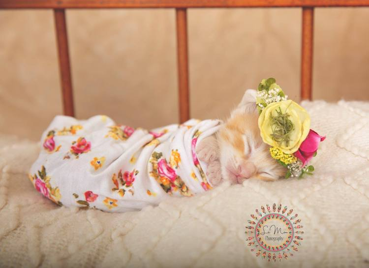 Adorables Fotos de Gatos Bebés