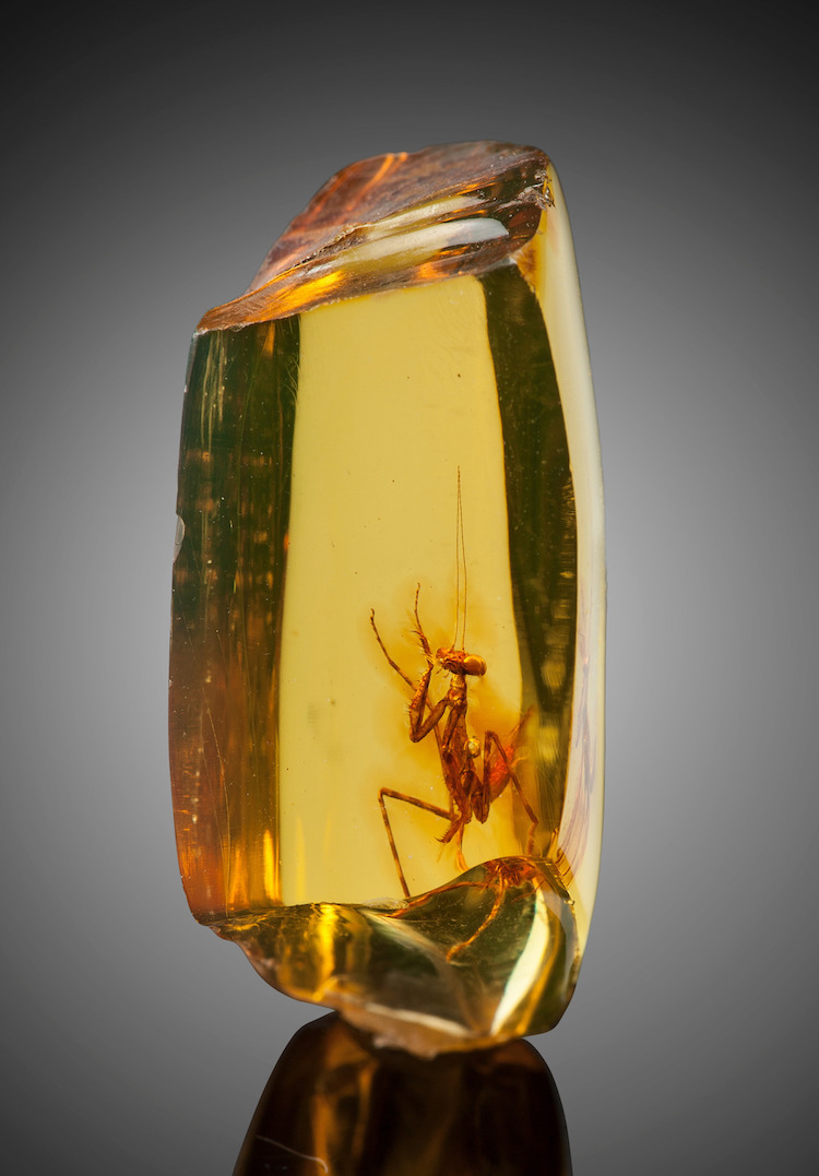 Praying Mantis in Amber