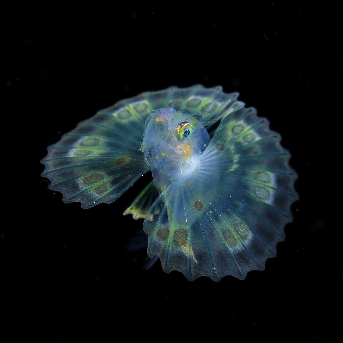 Ryo Minemizu Underwater Photographer