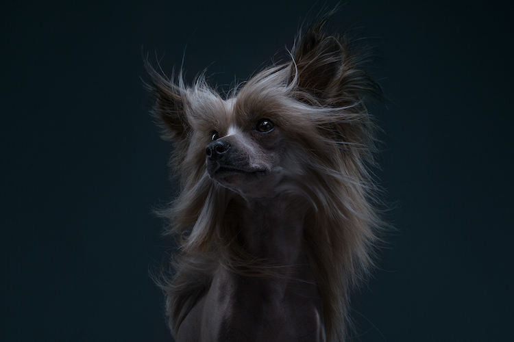 The Dog Show Season 2 Dog Portraits Different Dog Breeds Alexander Khokhlov Veronica Ershova