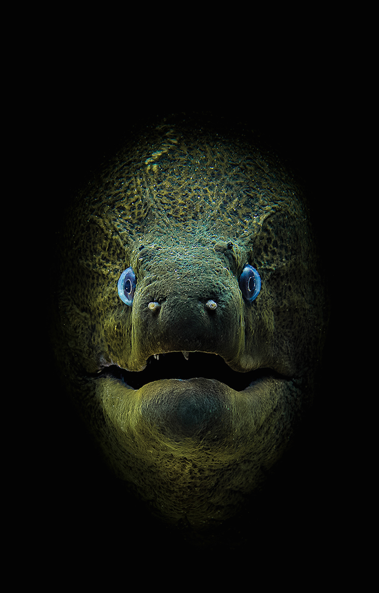 Underwater ​Photography Contest 2018 Winners Scuba​ ​Diving​ ​Magazine