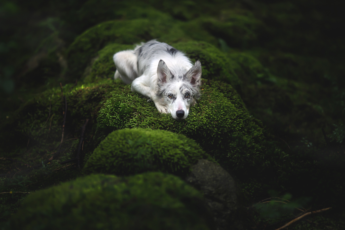 Dog Portraits by Alicja Myslowska