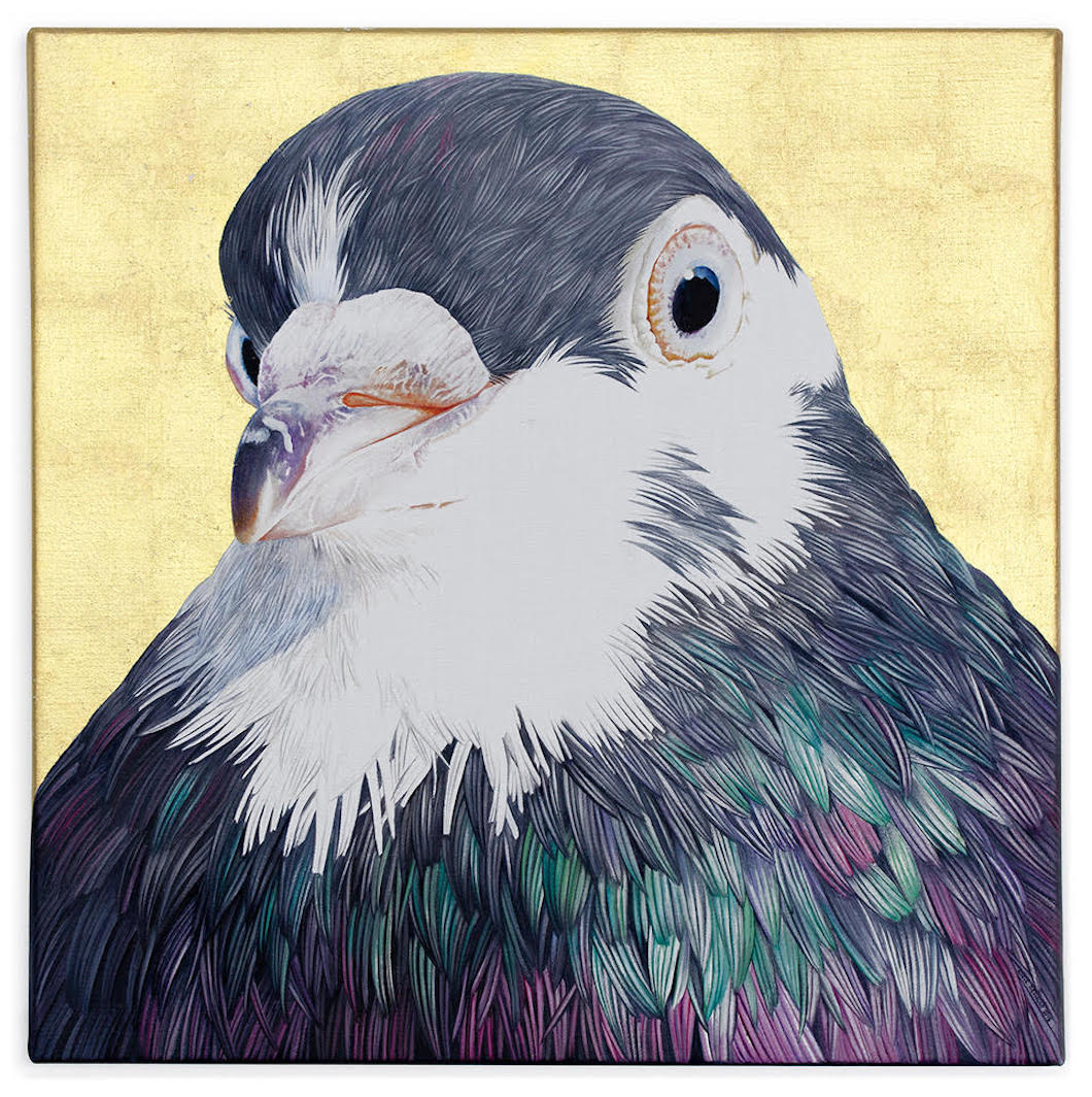 Adele Renault Pigeon Painting Pigeon Portraits Pigeon Feathers