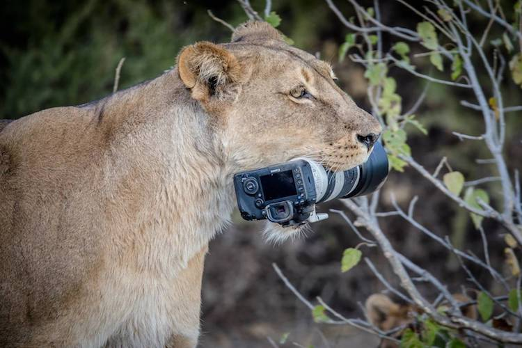 Animals Playing with a Camera Photographed by Barbara Jensen Vorster