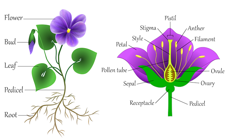 How to Draw Flowers with a Flower Diagram