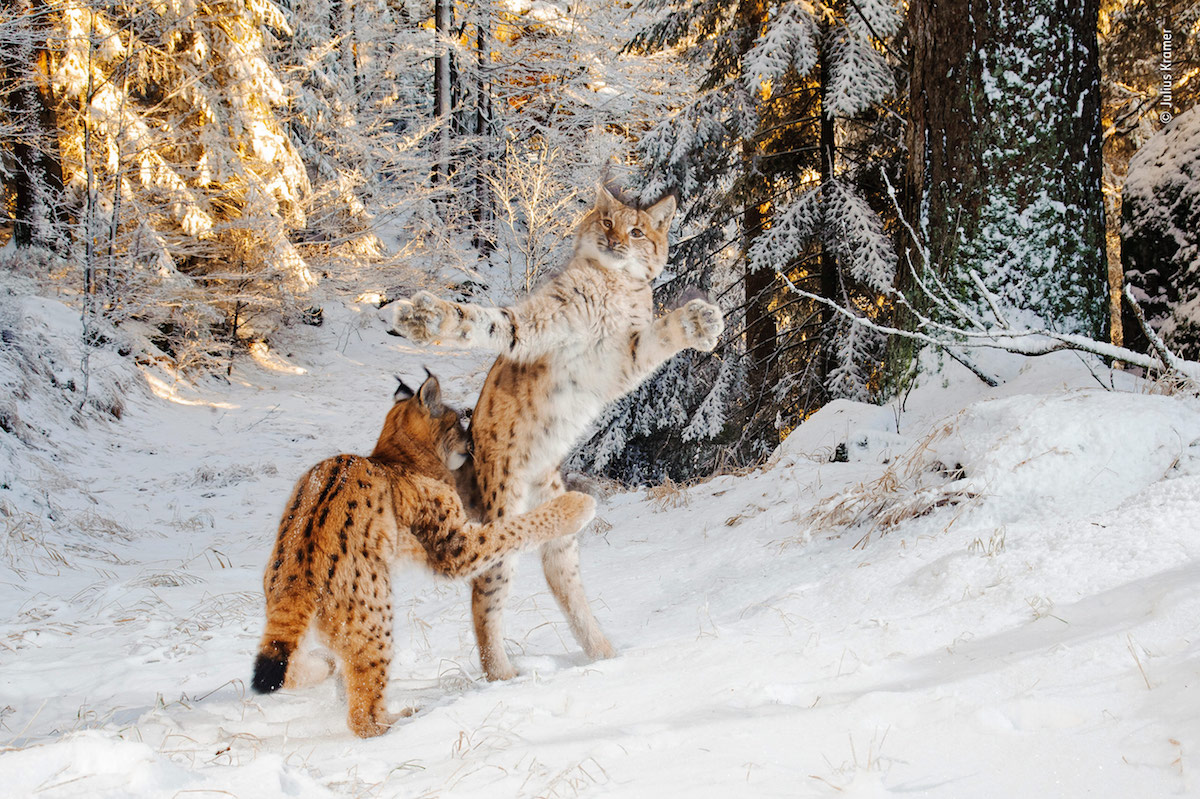 Wildlife Photography of the Year Highly Commended 2018 Wildlife Photography