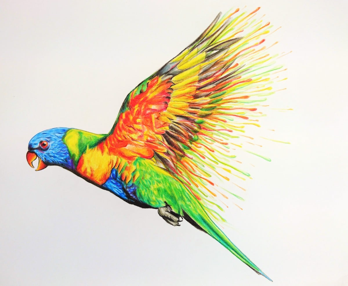 Artistic Colored Pencil Drawings