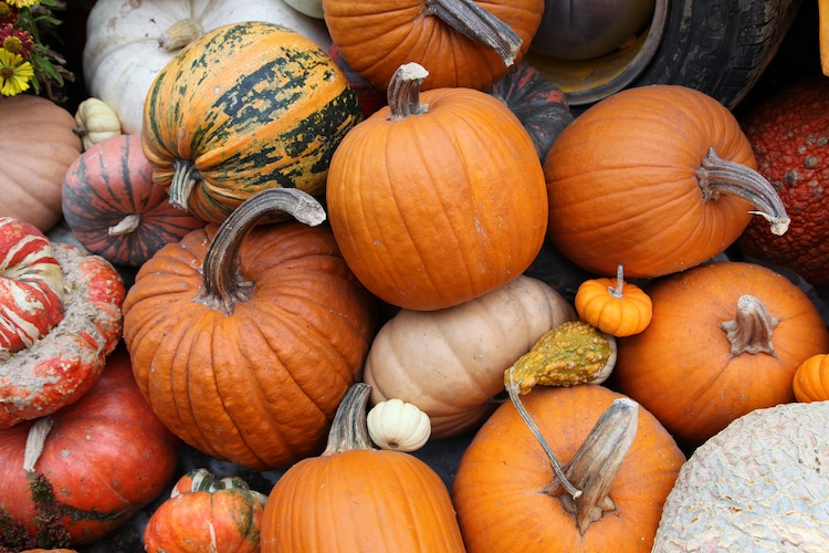 What is the History of Halloween History of Jack O Lanterns