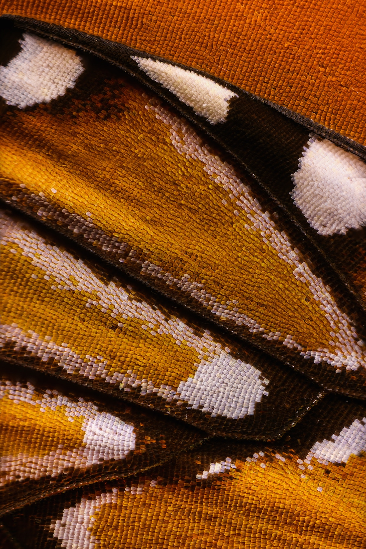 Macro Photography Butterfly Wings by Chris Perani