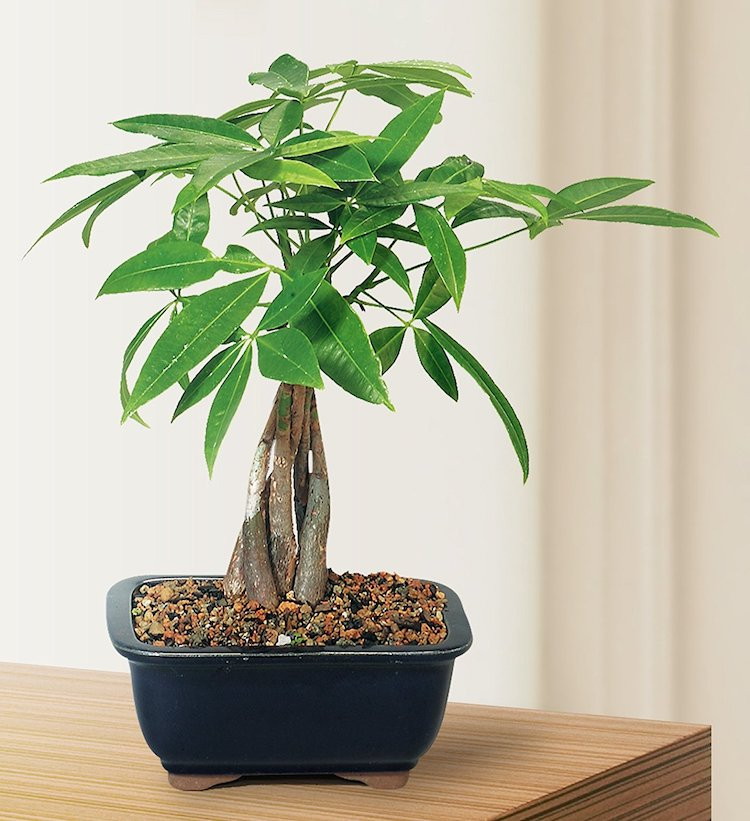 Plants on Amazon