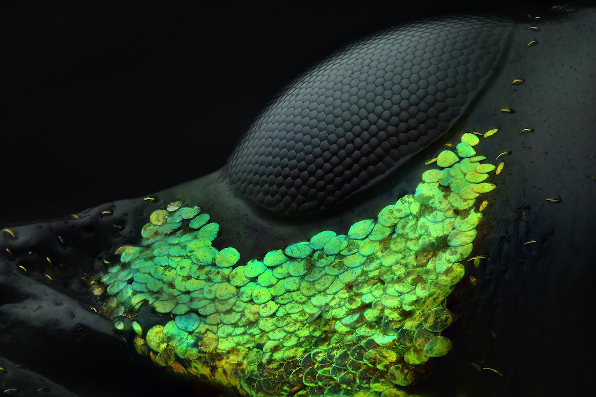 Nikon Small World Photomicrography Winners 2018