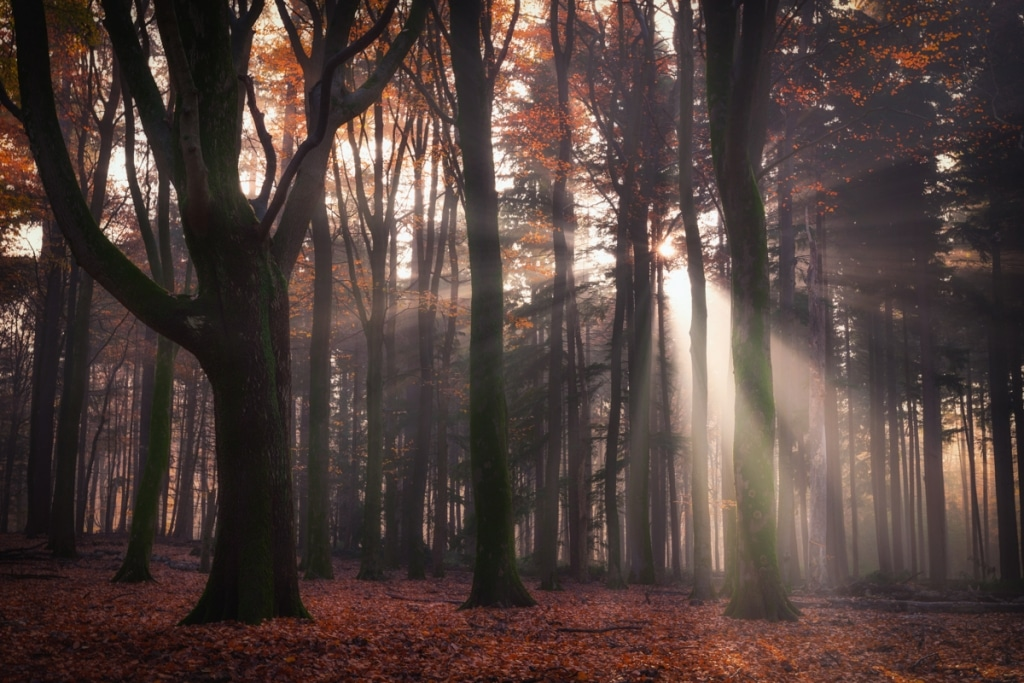 Photo of the Forest by Albert Dros
