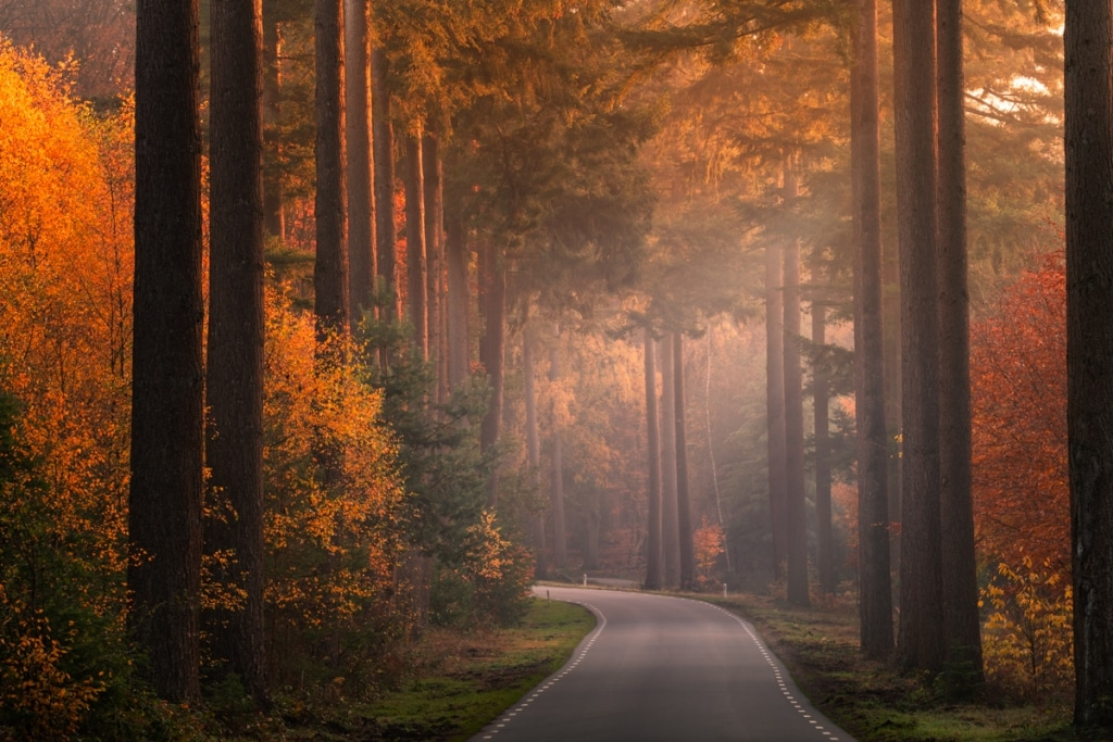 Foliage Photography by Albert Dros