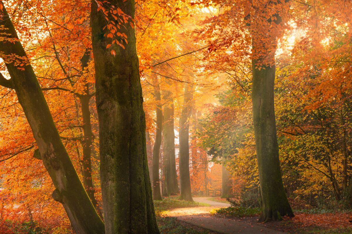 Golden Autumn Foliage Photography Albert Dros