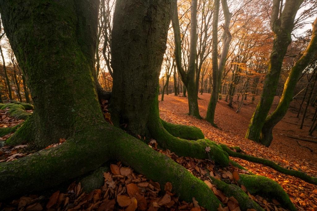Photo of Autumn Foliage by Albert Dros