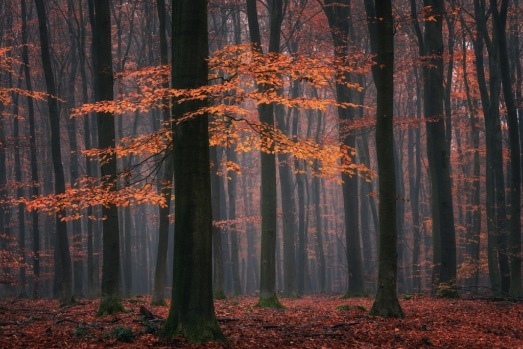Photo of Autumn Foliage by Albert Dros