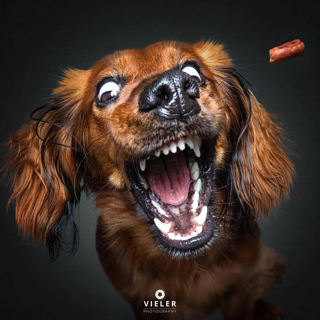 Dog Photography by Christian Vieler