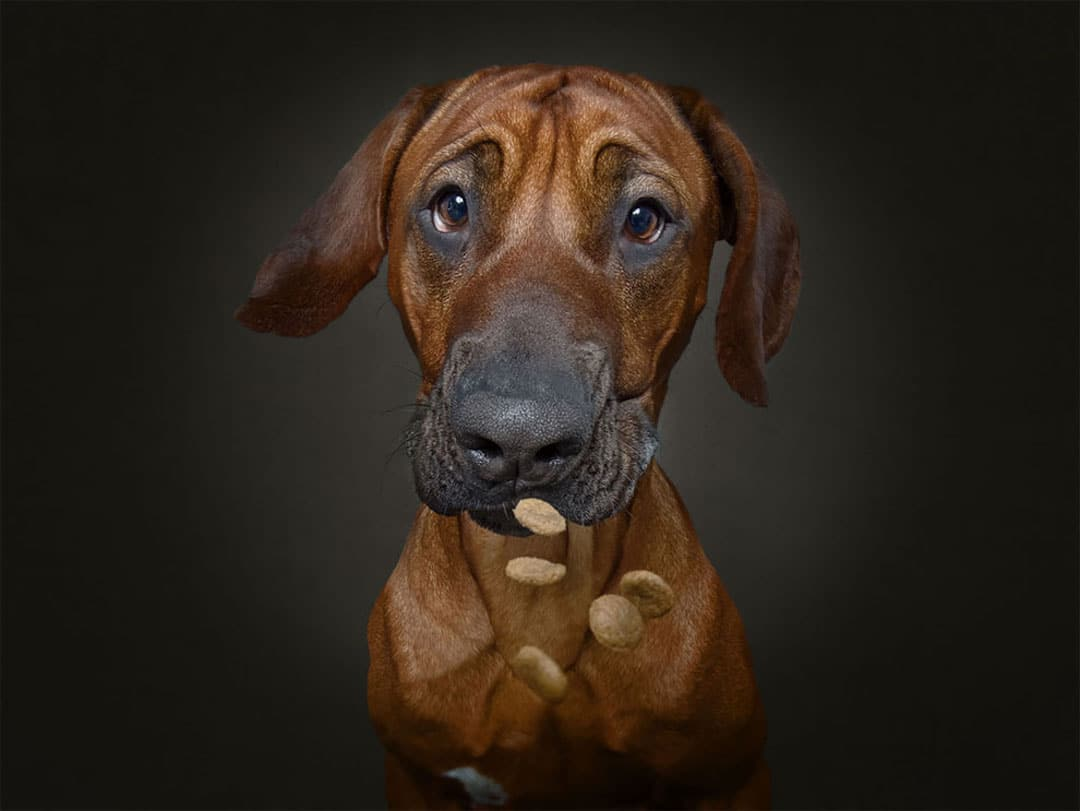 Pet Photography by Christian Vieler