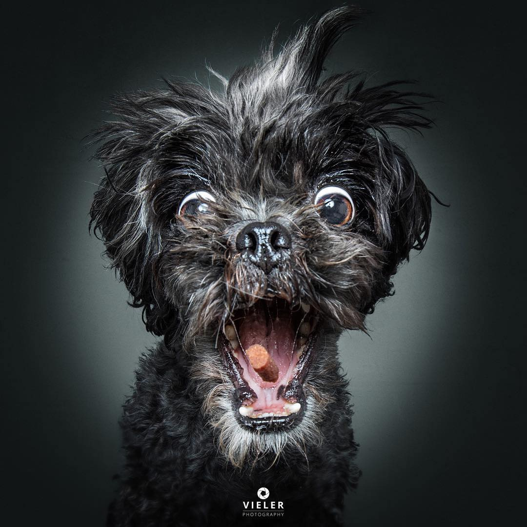 Dogs Catching Treats in Their Mouths by Christian Vieler