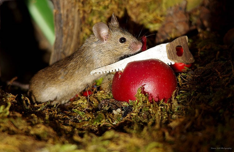 Mouse Photos by Simon Dell