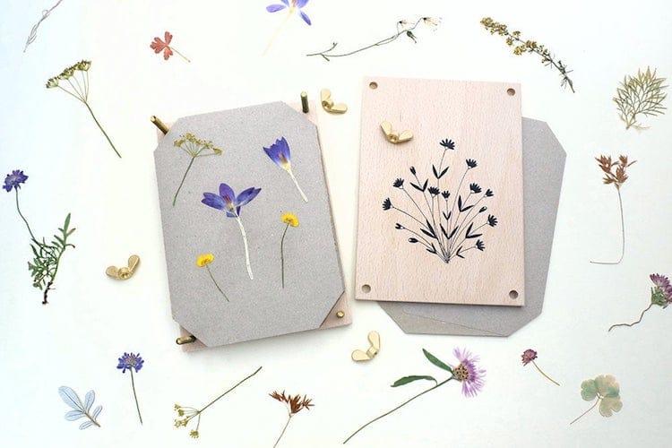 regalos de plantas